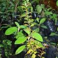 El programa Ecosistema y Sociedad año 2017 de la Corporación Nacional Forestal y en conjunto con la I. Municipalidad de...