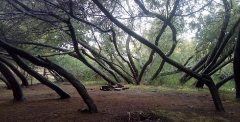 Ya se encuentran disponibles las bases para postular a la Concesión del Balneario Municipal Los Llanos para la Temporada de...
